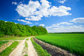 Splendid Cumulus Clouds  And Spring Field. Stock Image - 19544841