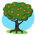 Orange Tree Illustration Stock Photo - 19566500