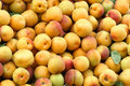 Apricot Stock Images - 19570884