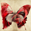Abstract Illustration With Butterfly Stock Photography - 19574192