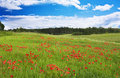 Field Of Red Poppies Stock Image - 19578731