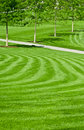 Huge Green Lawn Royalty Free Stock Photo - 19601955