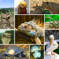 Collage Of Animals Royalty Free Stock Photography - 19607547