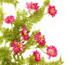 Daisy Flowers Floral Border Royalty Free Stock Photo - 19621275
