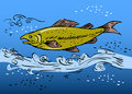 Speckled Trout Fish Underwater Stock Photography - 19633772