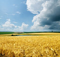 Gold Wheat Stock Photography - 19693642