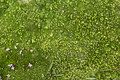 Green Textures In Alpine Moss Royalty Free Stock Photos - 19711938