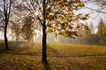 Autumn In Park Royalty Free Stock Image - 19713656