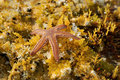 Starfish Royalty Free Stock Images - 19717499