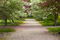 Country Lane Royalty Free Stock Photography - 19726377
