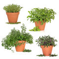 Herb Collection Royalty Free Stock Images - 19734539