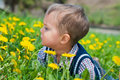 Boy With Dandelion Stock Image - 19752521
