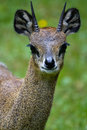 Antelope Royalty Free Stock Images - 19785039