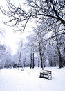 Row Of Benches Covered In Powdery Soft Snow Stock Photos - 1980233