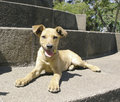 Mixed Breed Dog Down Stock Images - 1982604