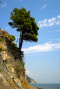 Lonely Pine Royalty Free Stock Image - 1985636