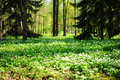 Forest Meadow Stock Photo - 19805150