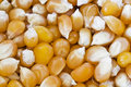 Corn Grains Royalty Free Stock Images - 19832749