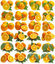 Orange Fruits Royalty Free Stock Images - 19846039