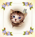 Tabby Kitten And Butterfly Royalty Free Stock Photography - 19869277