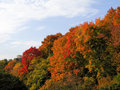 Fall Color Change Royalty Free Stock Photography - 19877147