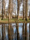 Bare Trees Reflected In Water Royalty Free Stock Images - 1996409