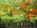 Colorful Autumn Trees Royalty Free Stock Photo - 1996465