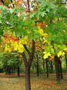 Forest In Autumn Royalty Free Stock Photos - 1996468