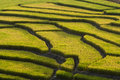 Terraced Rice Field Royalty Free Stock Photography - 19914607