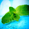 Freshness Mint Stock Images - 19916424
