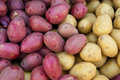 Organic Red And Yellow Potatoes Stock Images - 19921394