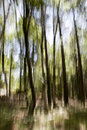 Abstract Forest Royalty Free Stock Image - 19929546