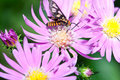 Nature Insect Pollination Royalty Free Stock Photo - 19936295
