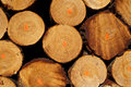 Pile Of Timber Logs From Logging Royalty Free Stock Photography - 19958647