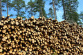 A Large Stack Of Wood For Renewable Energy Stock Images - 19987034