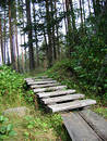 Stair In The Forest Stock Photo - 204270