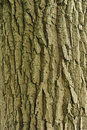 Tree Bark Stock Images - 20026614