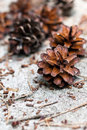 Pine Cones Royalty Free Stock Photography - 20032917