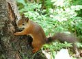 Squirrel Royalty Free Stock Photos - 20039528