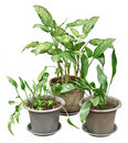 Plants Royalty Free Stock Image - 20071716