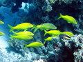 Fish And Coral Reef Royalty Free Stock Image - 20074336