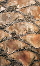 Palm Tree Trunk Texture Stock Image - 20075711
