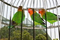 Parrots In Cage Royalty Free Stock Photography - 20083187