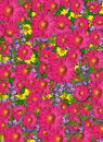 Carpet Of Flowers Royalty Free Stock Image - 20092036