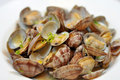 Butter Clams Royalty Free Stock Photos - 20093248