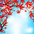 Red Japanese Maple Leaves Against Blue Sky. EPS 8 Royalty Free Stock Photography - 20093707