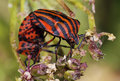Bugs Mating Stock Images - 20134864