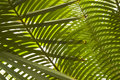 Palm Leaves Stock Images - 20149794