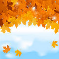 Vector Red Maple Leaves On Blue Sky Background Stock Images - 20153964