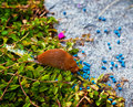 Snail In The Garden Royalty Free Stock Photo - 20175805